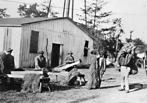 Black and white photograph of 5 African American men working outside breaking hemp. There is a white barn structure in the background. 1 man holds a large bundle on his back.